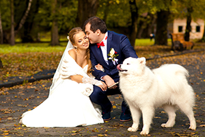 Husky at wedding