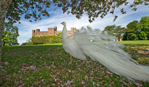Get Hitched at Scone Palace