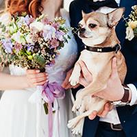 Weddings Go To The Dogs As Puppy Love Grips The Nation