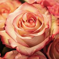 Wedding style - coral coloured roses