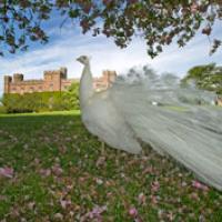 Scone Palace Wedding Venue