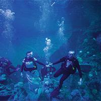 Couple getting married underwater