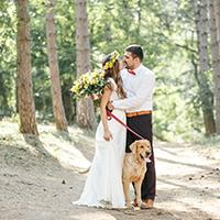 Dog in wedding photograph