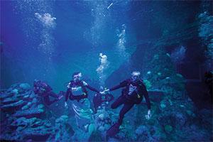 Underwater wedding venue